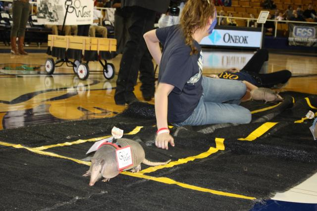 Armadillo Races (91)